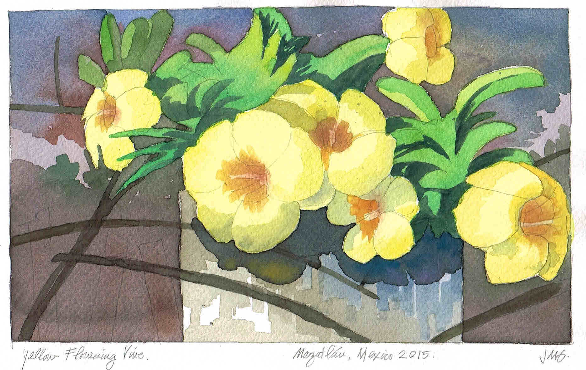 1865x1176 Watercolor Painting Of Tropical Mexican Flowering Plant Jeffrey