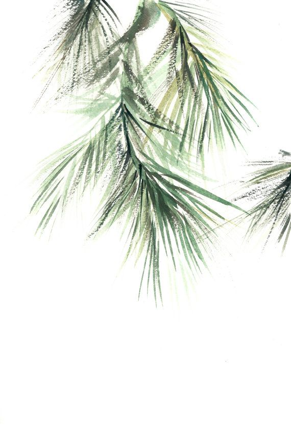 570x855 Pine Tree Branch Minimalist Fine Art Print, Botanical Watercolor