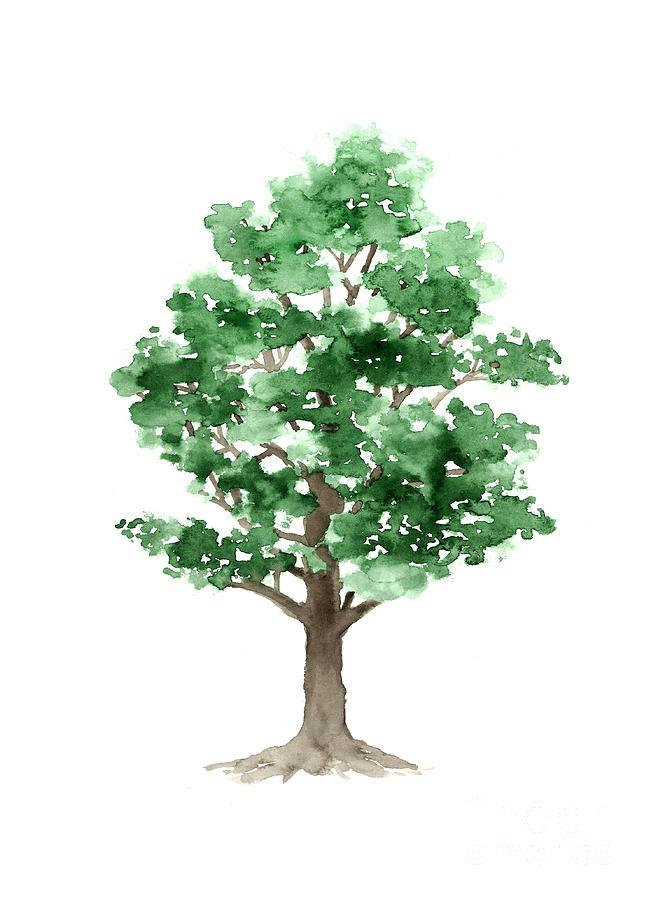 651x900 Beech Tree Minimalist Watercolor Painting Painting By Joanna Szmerdt