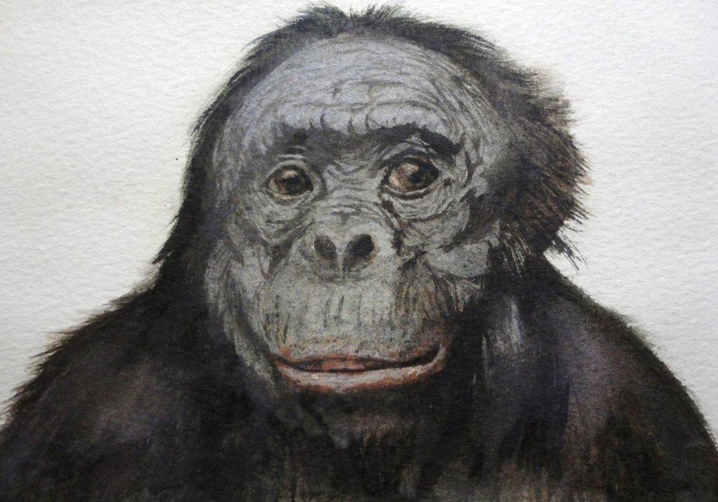 1024x716 Monkey