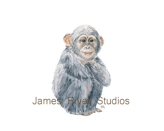 570x456 Monkey Art Monkey Painting Monkey Print Monkey Watercolor Painting