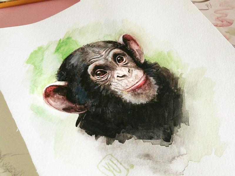800x600 Watercolor Monkey By Elena Yudina