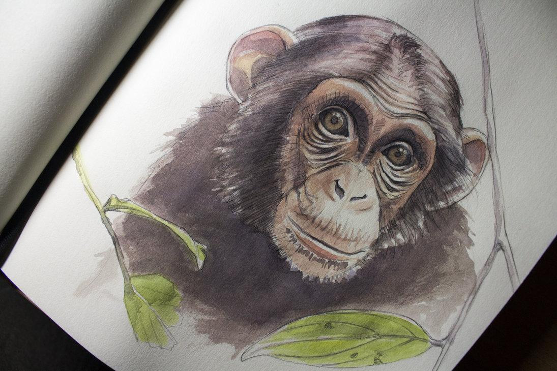 1095x730 Watercolor Little Cute Monkey By Ondraede