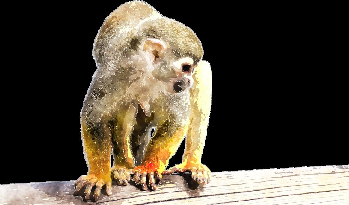 1165x686 Watercolor Monkey By Lavandalu