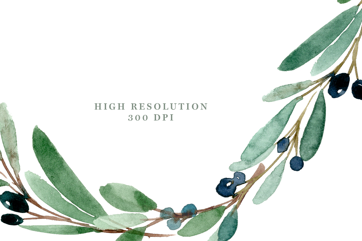 Olive Branch Watercolor At Getdrawings Com Free For Personal Use