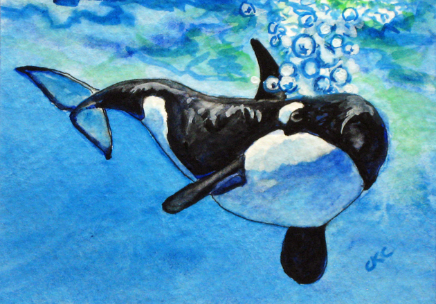 630x439 Colleen K Carrigan Aceo Orca Whales Puget Sound Watercolor Painting