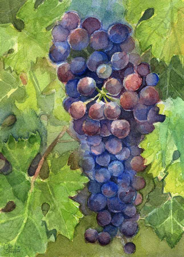 646x900 Grapes Painting Lovely Watercolor Grapes Painting Painting By Olga