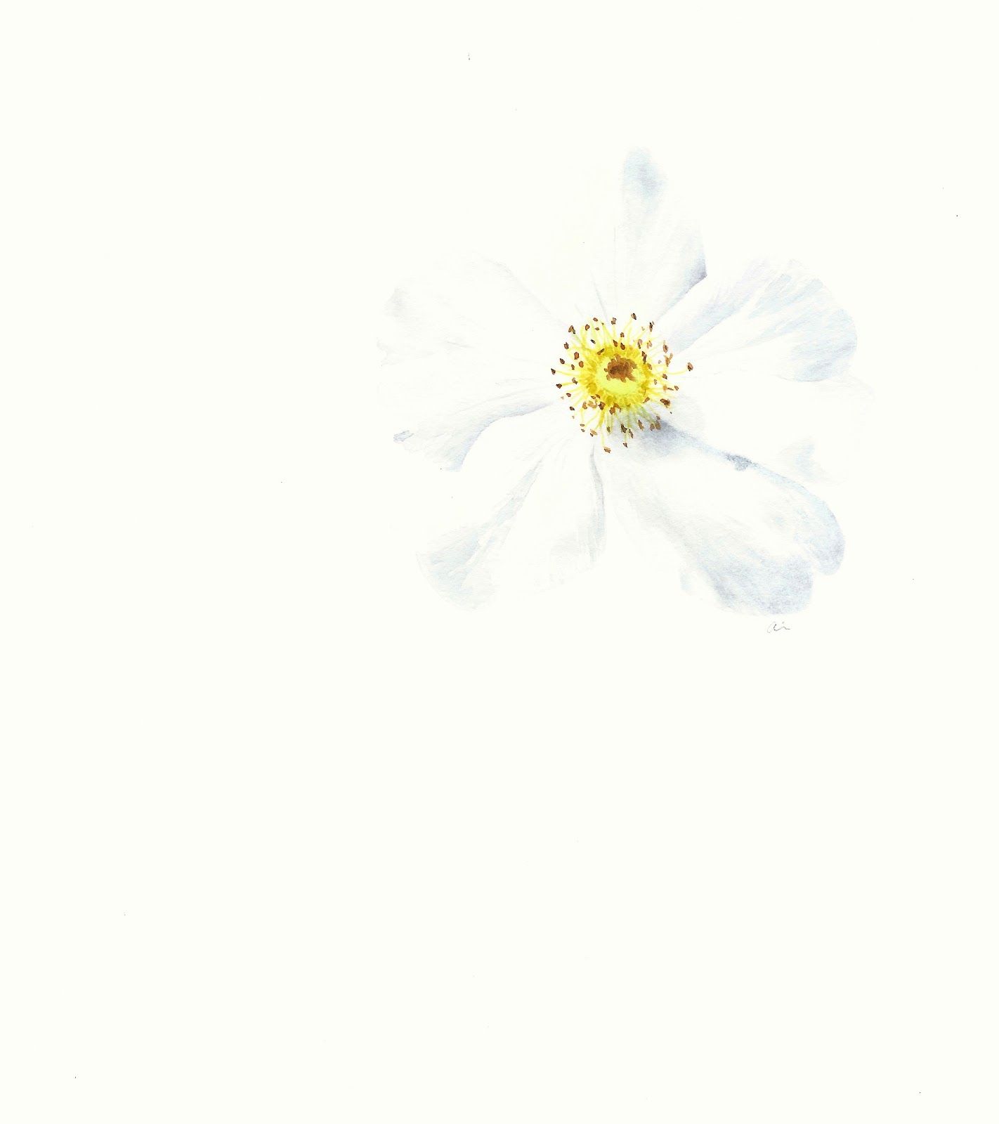 Painting White Flowers In Watercolor