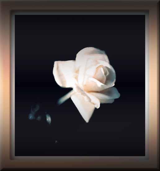 516x550 Painting White Rose