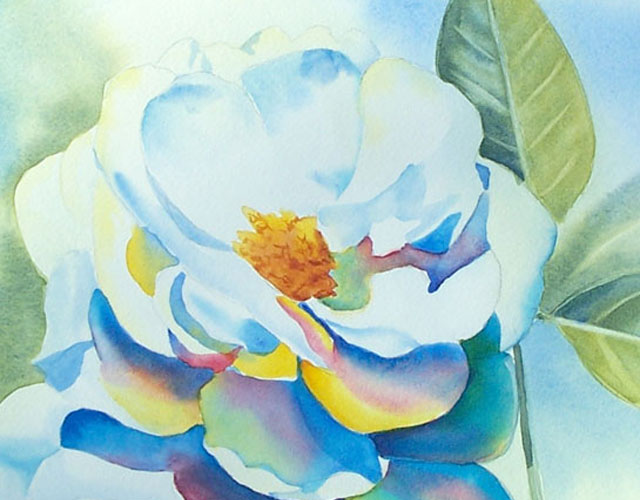 640x500 Painting A White Rose Flower In Watercolor