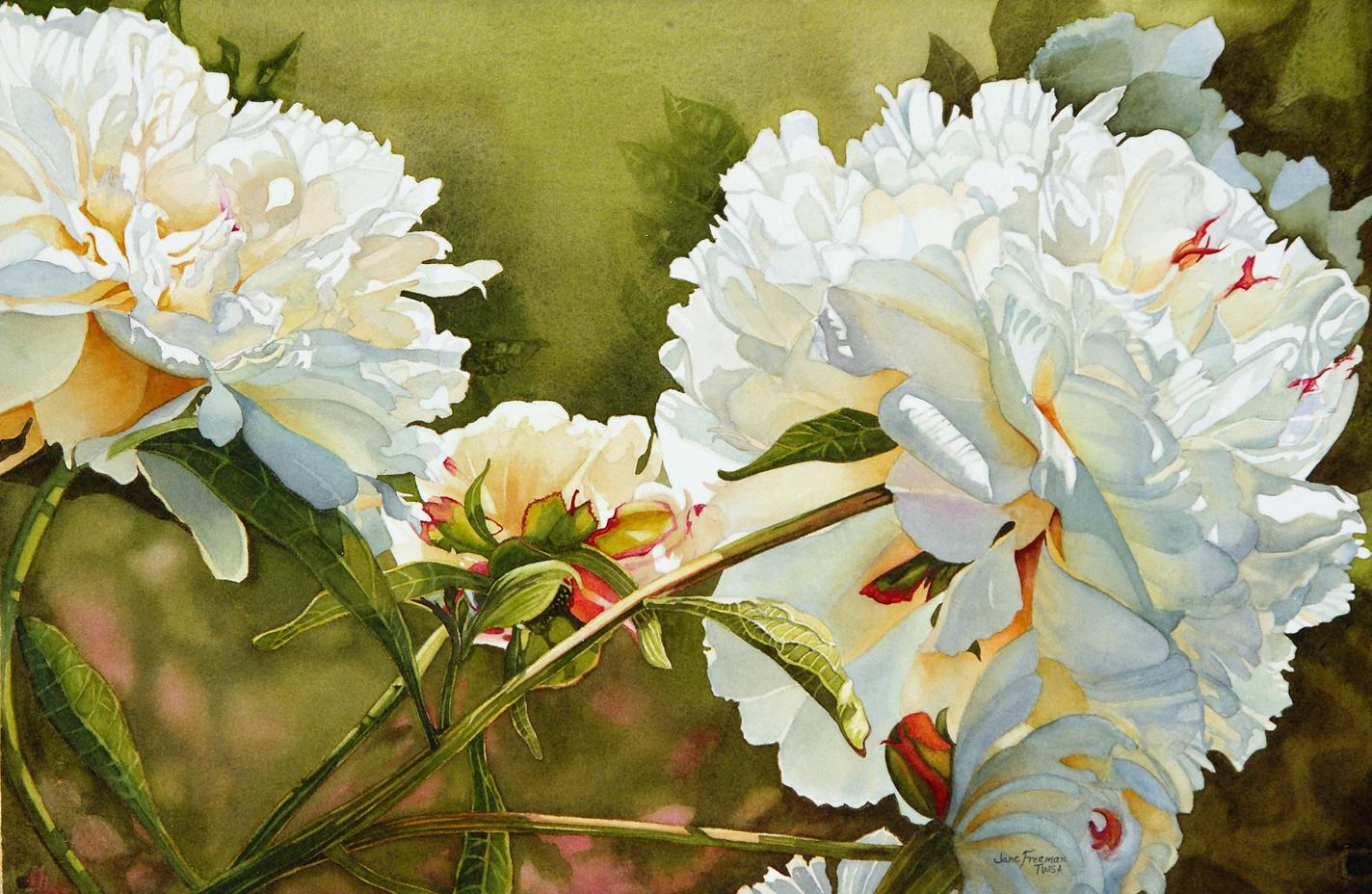 1424x928 Watercolor Mania Winter White Peony