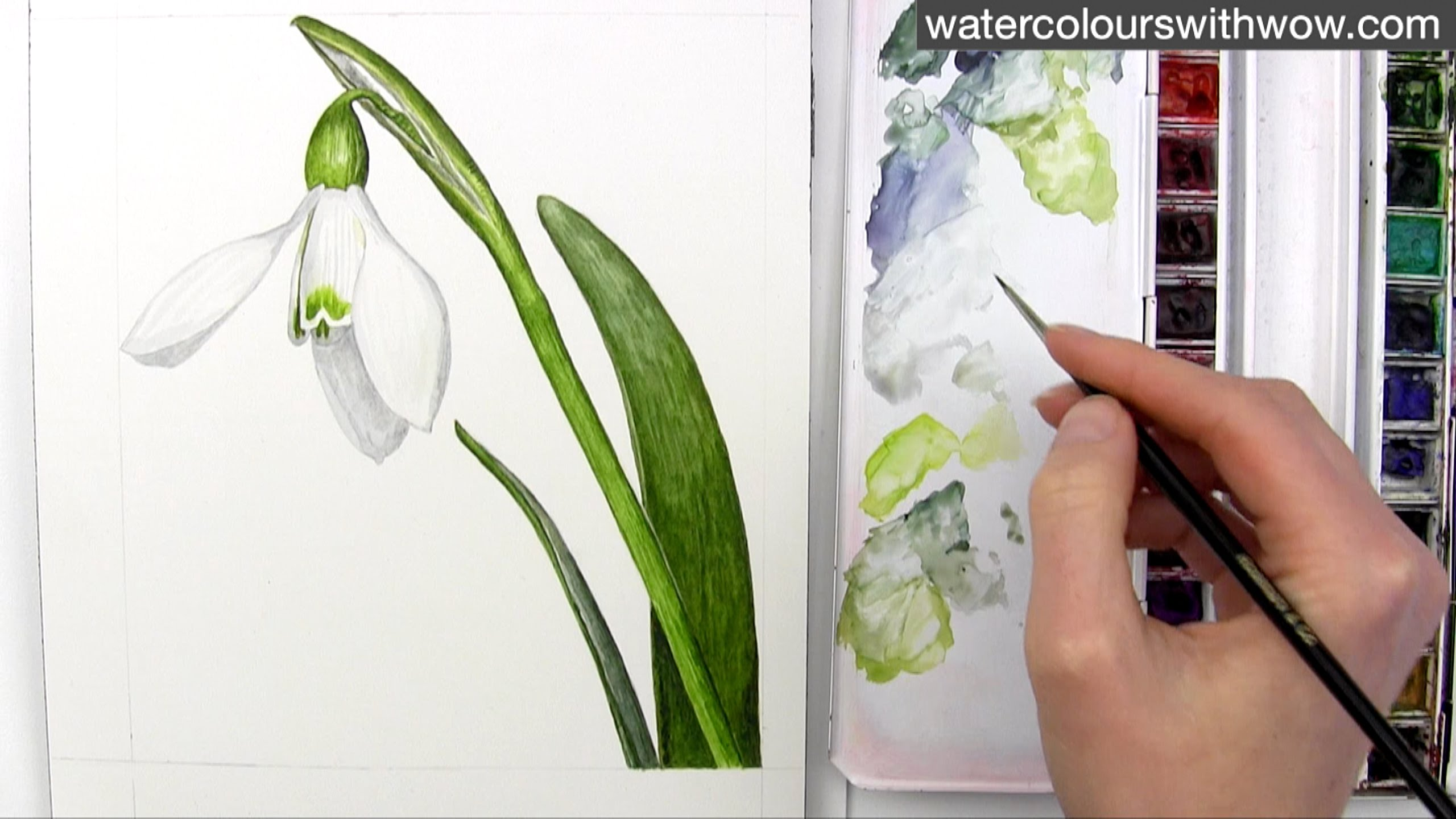 2560x1440 How To Paint A Realistic White Snowdrop Flower In Watercolor By