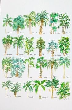 Palm Leaves Watercolor