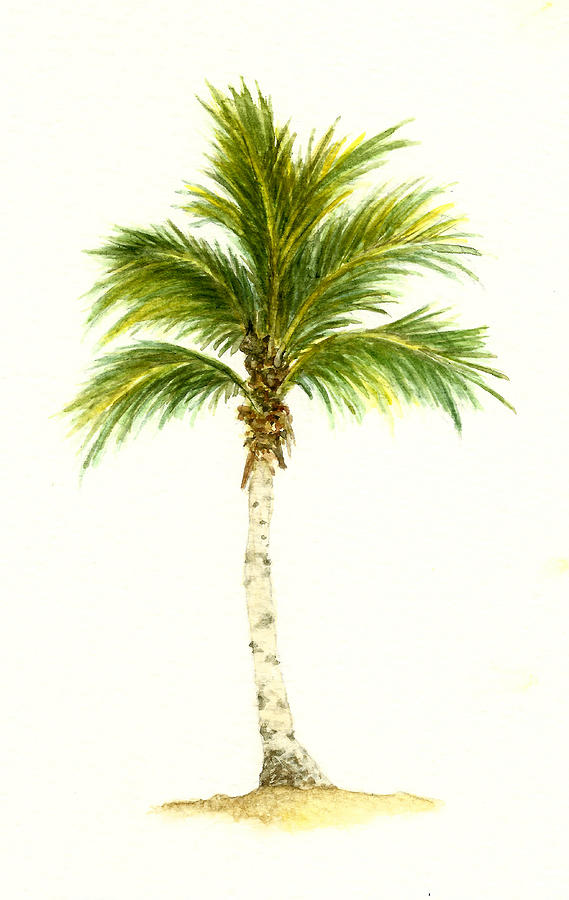 569x900 Palm Tree Number 3 Painting By Michael Vigliotti