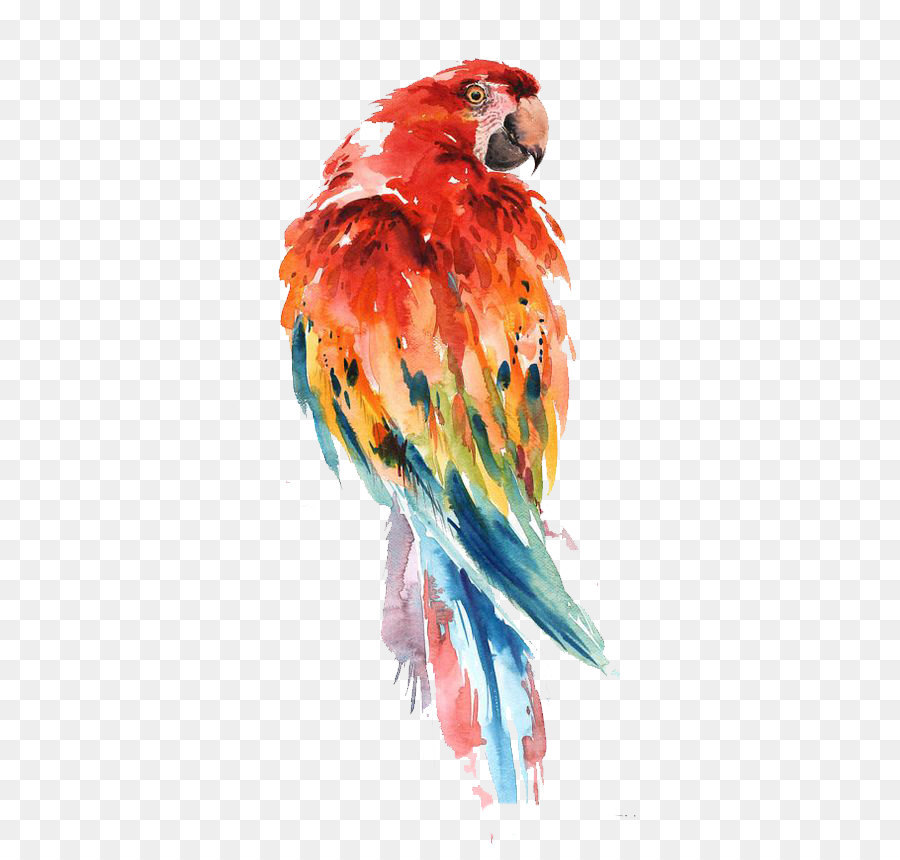 Parrot Watercolor at GetDrawings com | Free for personal use