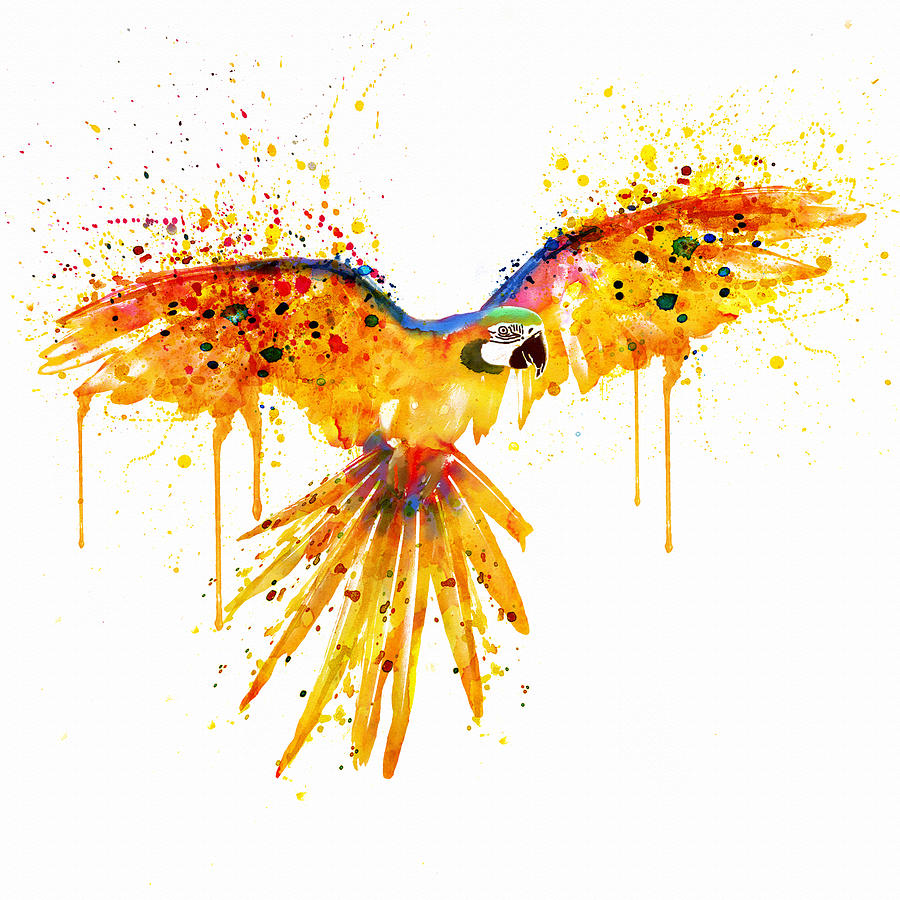 900x900 Flying Parrot Watercolor Painting By Marian Voicu