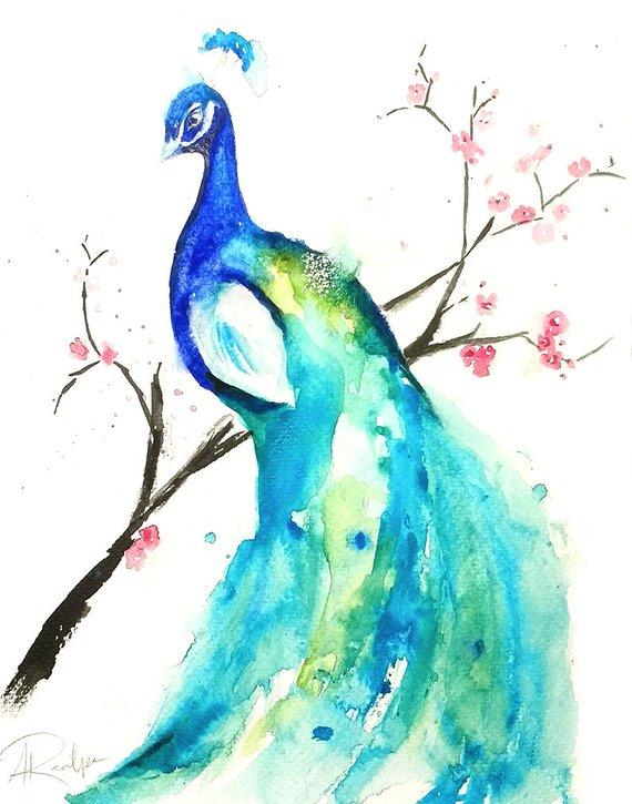 570x725 Peacock Watercolor Painting Original Artwork Original Etsy