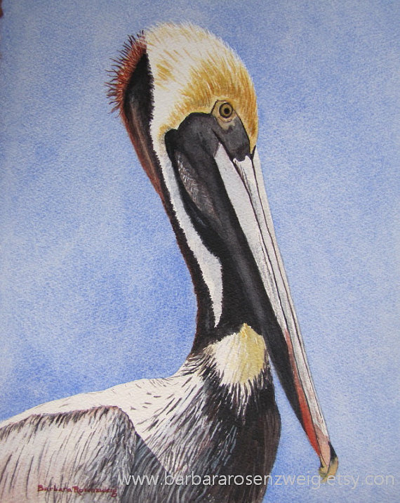 570x716 Pelican Bird Print Nautical Home Decor, Pelican Wall Art, Pelican