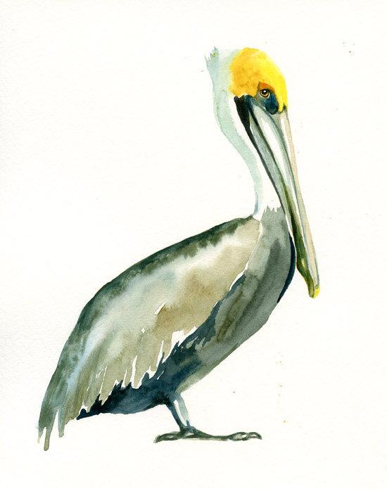 550x695 Brown Pelican 5x7 Print Art Print Bird Watercolor Print Giclee