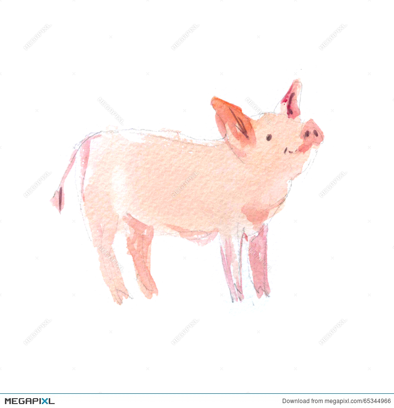 800x830 Watercolor Hand Drawn Illustration Of Cute Pigs. Illustration