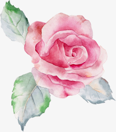 391x446 Hand Painted Pink Roses, Hand Painted Roses, Watercolor Pink Rose