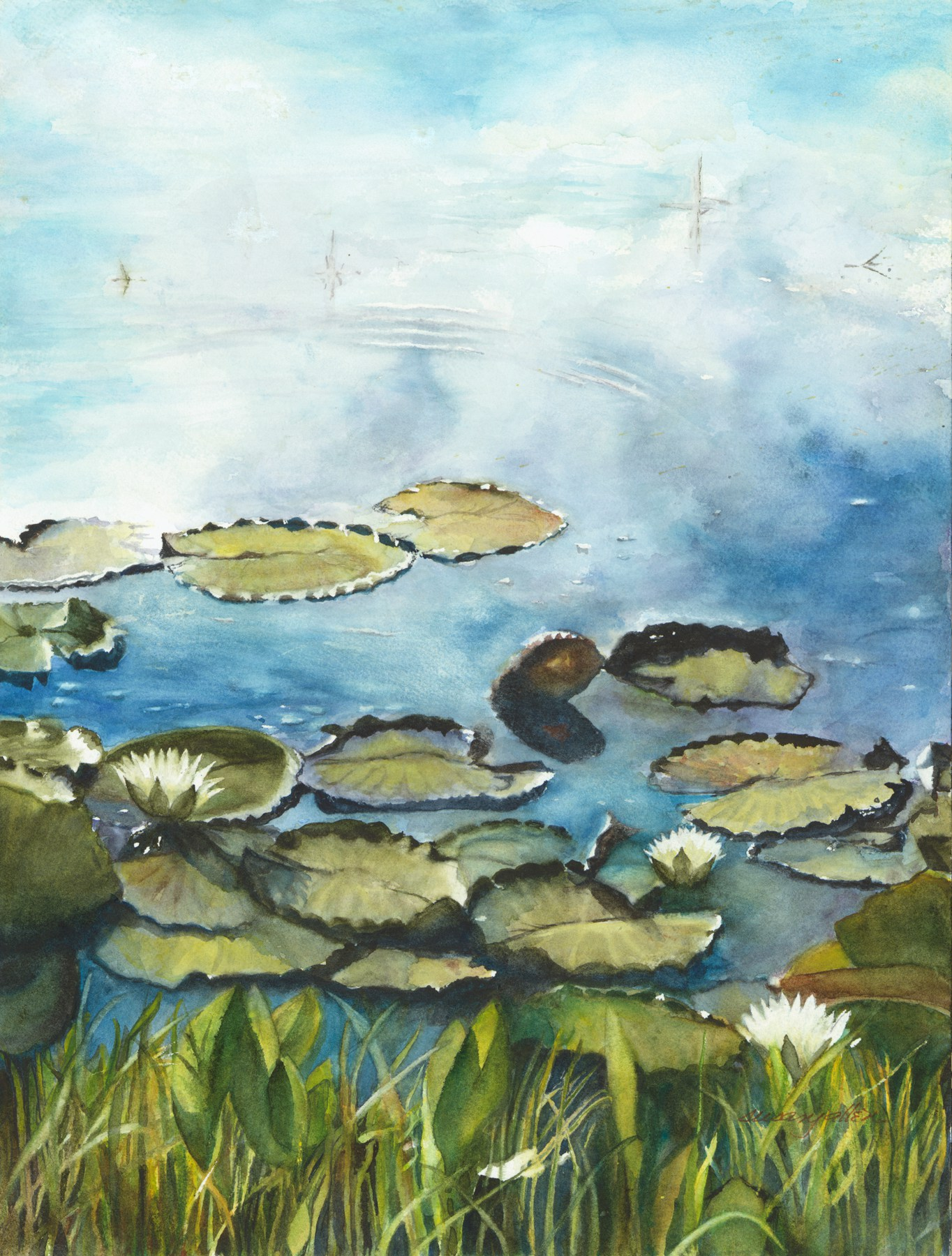 1364x1800 Susan Allen Lily Pond Clouds Florida Watercolor Society