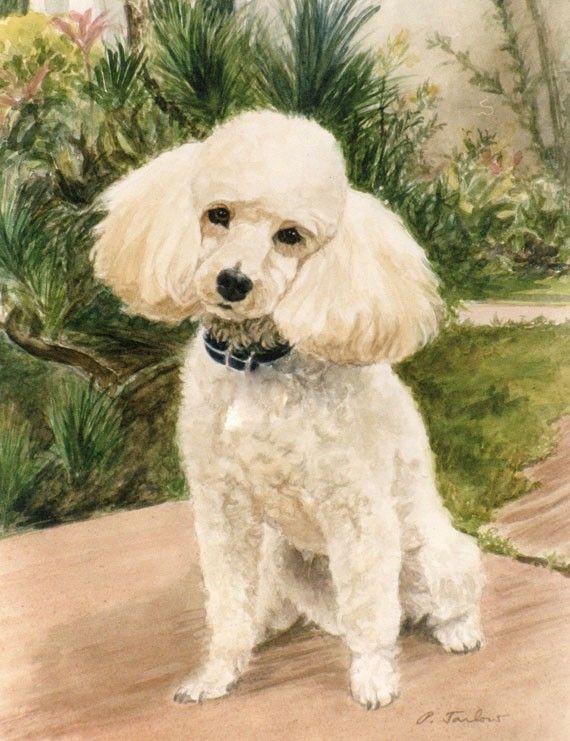 570x741 Poodle Print, Poodle In Garden Art Print, Poodle Art, Dog Art, Dog
