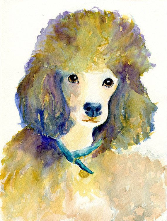 570x752 Poodle Dog Art Poodle Art Print Poodle Dog Art Watercolor Etsy