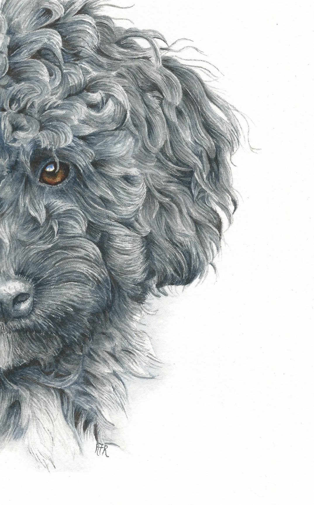 1074x1723 How To Paint A Curly Haired Poodle In Watercolor