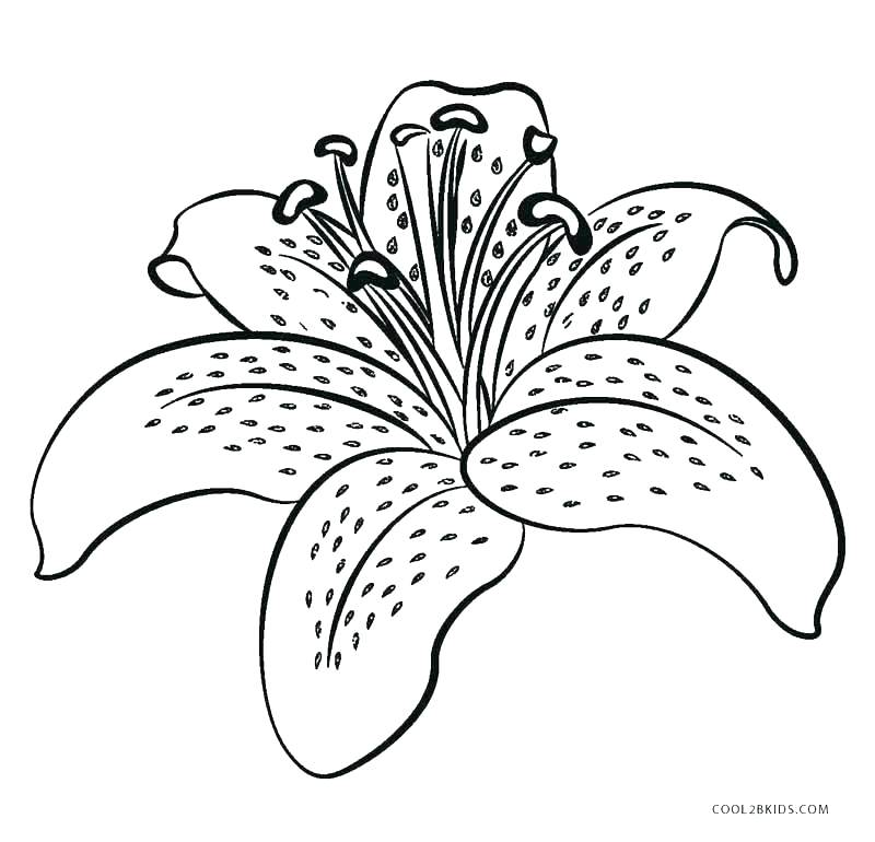 The Best Free Coloring Pages Watercolor Images. Download From 193 Free  Watercolors Of Coloring Pages At GetDrawings