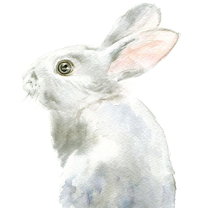 700x700 Gray Bunny Rabbit Original Watercolor Painting Susan Windsor