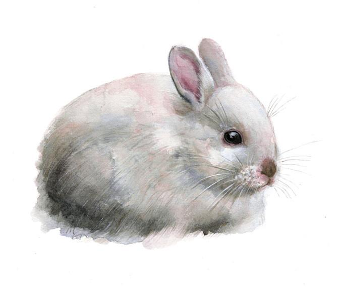 670x570 Rabbit Watercolor Archival Print Mira Guerquin Watercolors
