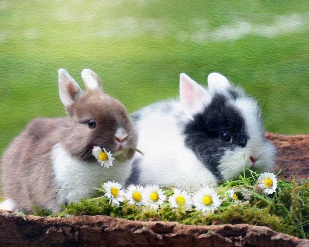 615x492 Rabbit Watercolor Painting Free Stock Photo