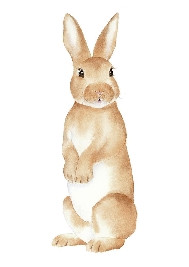 636x900 Rabbit Watercolor Painting By Zapista