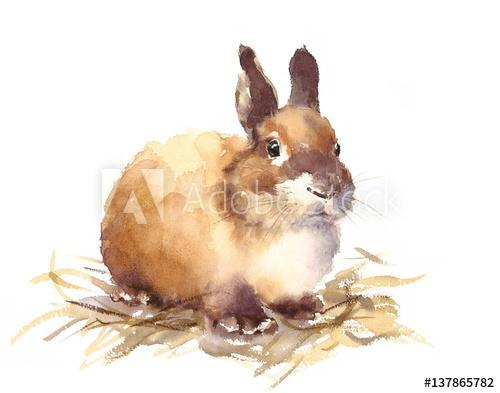 500x393 Watercolor Cute Baby Bunny Rabbit Hand Drawn Pet Animal