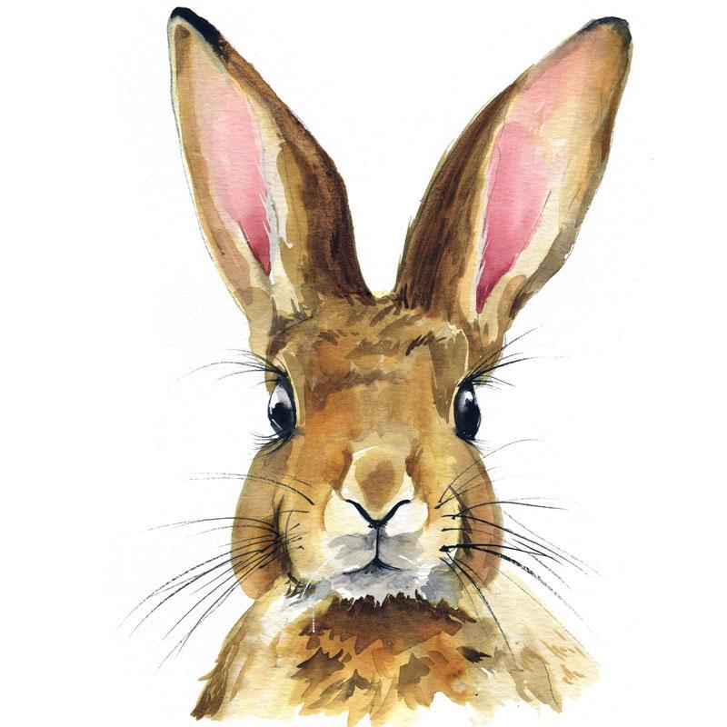 800x800 Watercolor Rabbit Paint Kit