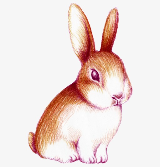 511x533 Hand Painted Watercolor Rabbit, Watercolor Clipart, Rabbit Clipart