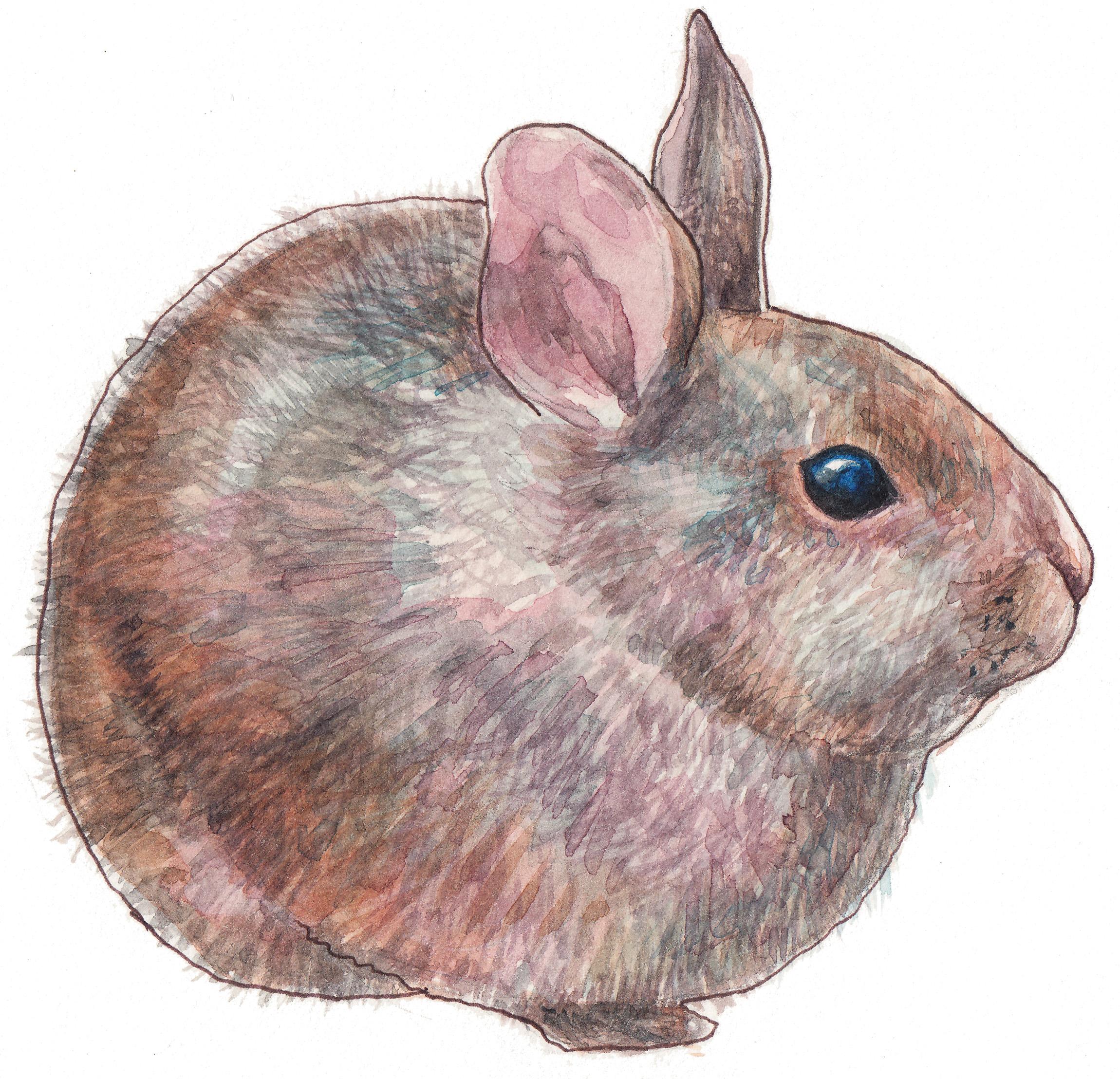 2300x2216 Volcano Rabbit ,watercolor Painting