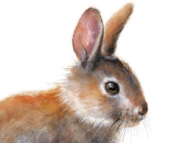 570x461 Bunny Rabbit Watercolor Painting. Art Print. Nature Animal Etsy