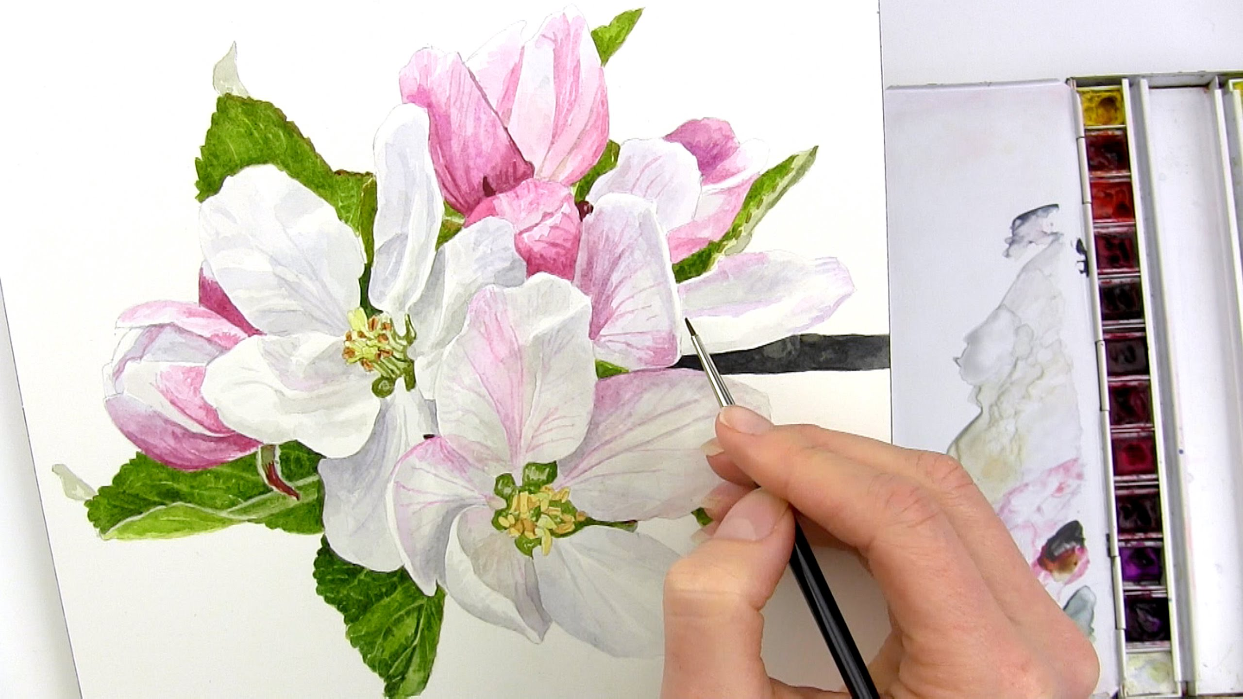 2560x1440 How To Paint Realistic Apple Blossom In Watercolour With Anna
