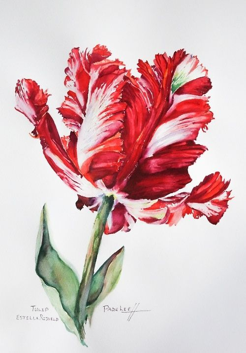 500x716 Pin By Takakosaya On Watercolor In 2018 Watercolor