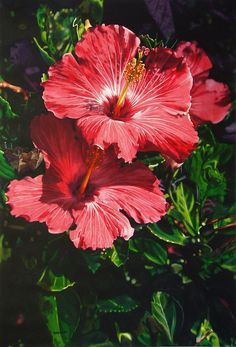 236x347 188 Best Watercolor Painting Flowers Amp Leaves Images On