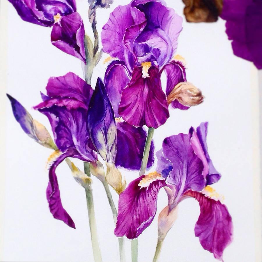 900x900 Poetic Amp Realistic Flowers Watercolor Paintings Fubiz Media