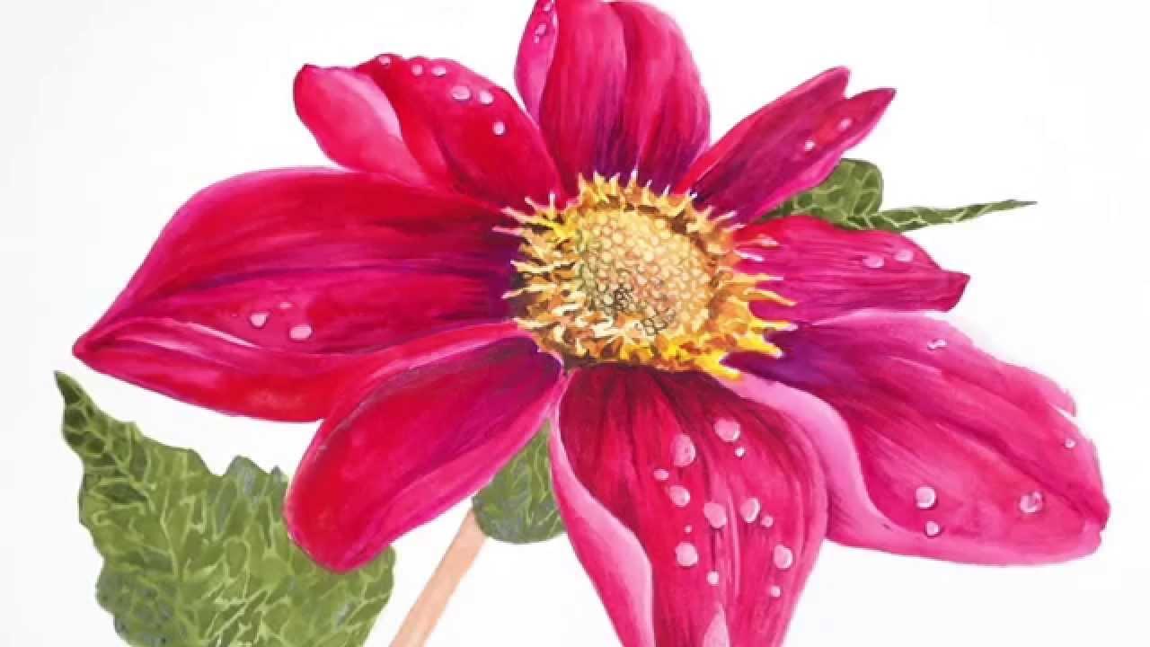 1280x720 Watercolor Flower Series