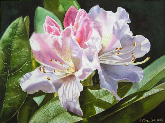 567x422 White Rhododendron In Watercolor, Watercolor Flower Painting