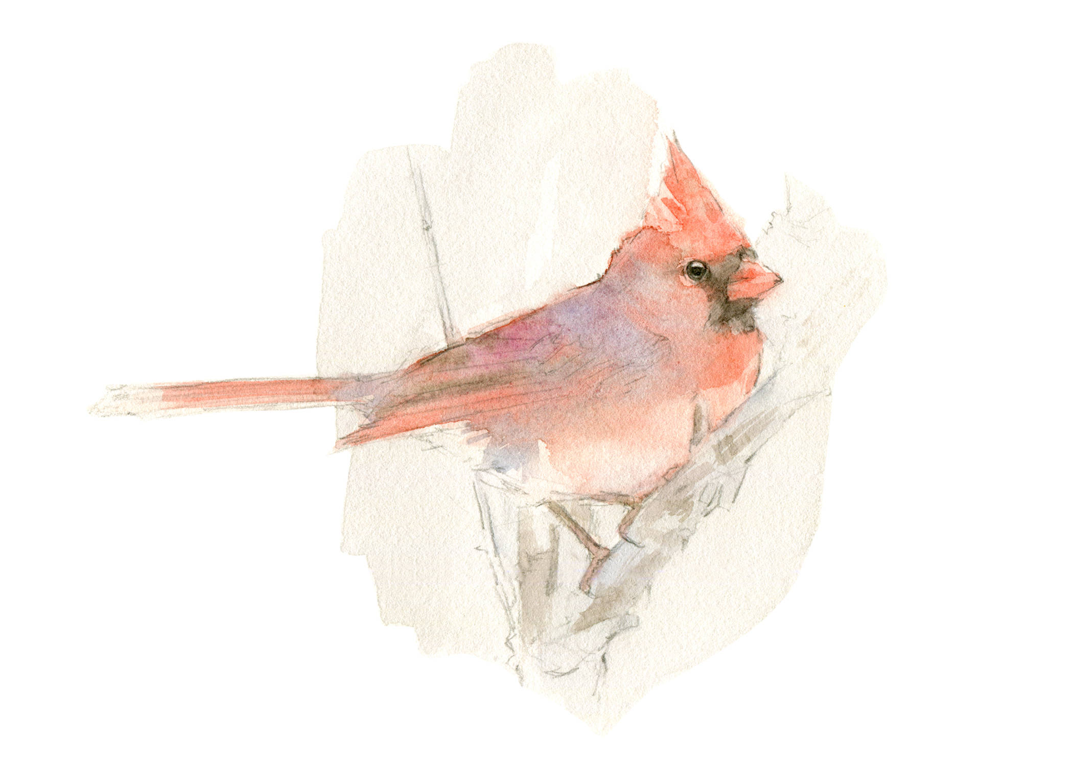 Images of Watercolor Cardinal Youtube - #rock-cafe