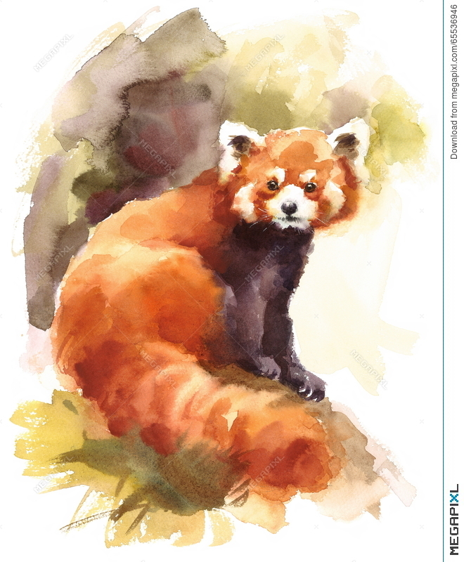 660x800 Red Panda Watercolor Animal Illustration Hand Painted Illustration