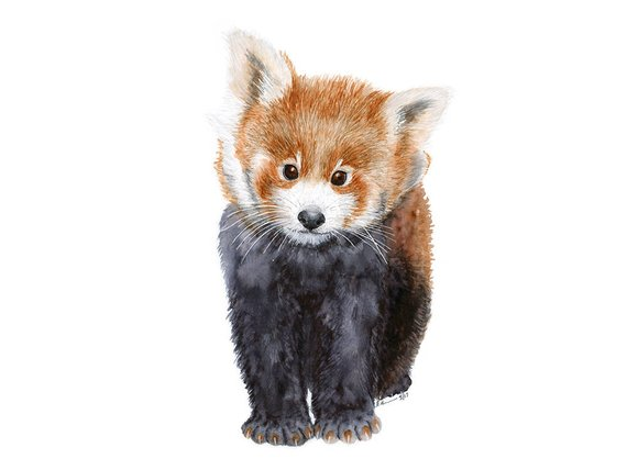 570x428 Red Panda Watercolor Animal Nursery Art Baby Animal Print Etsy
