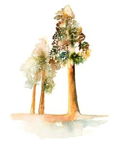 Redwood Tree Watercolor