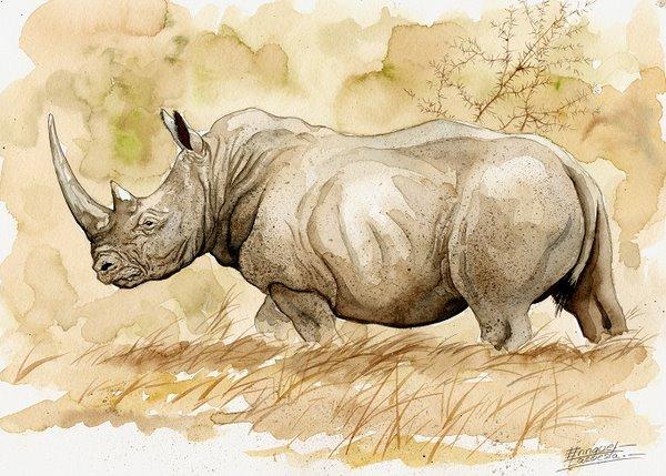 600x429 Big Five Watercolor Gallery African Wildlife Watercolor Art